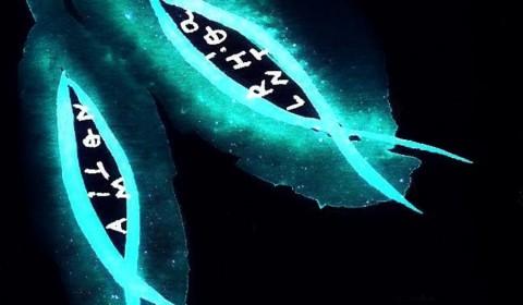 Irma - peixos Distancies